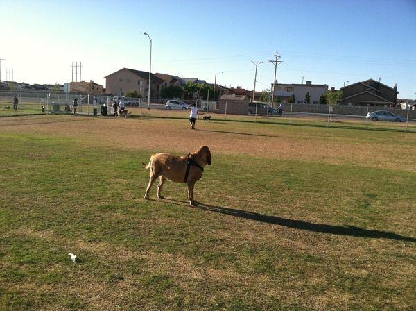 Tierra este dog park 4 2011