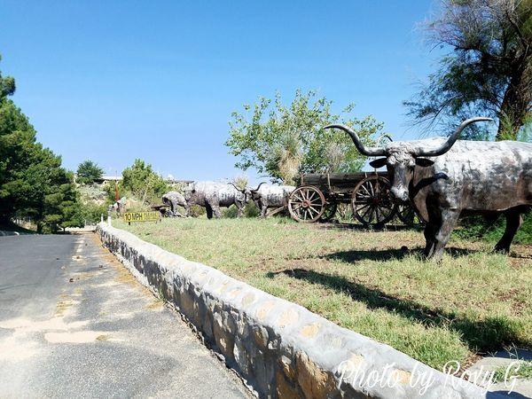 Cattlemans