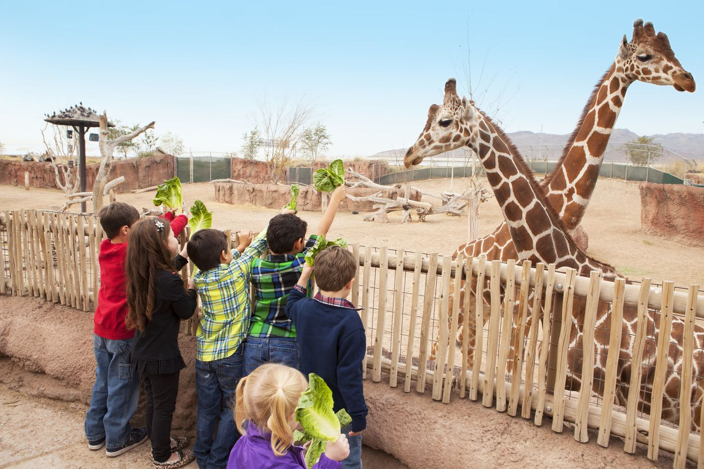 7 Top Family-Friendly Things to Do in El Paso