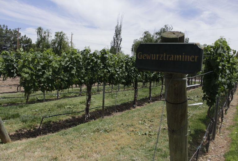 Zin Valle Vineyards