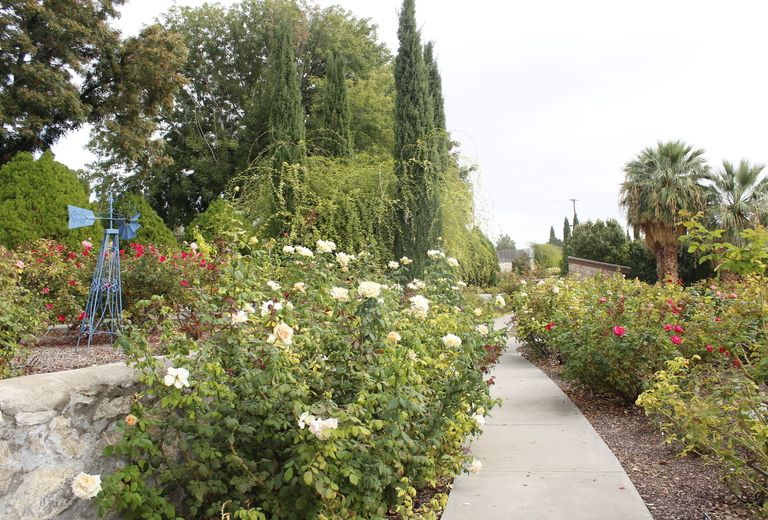 el paso municipal rose garden - Pictures Of Rose Gardens