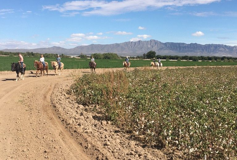 Horseback Riding and Tours