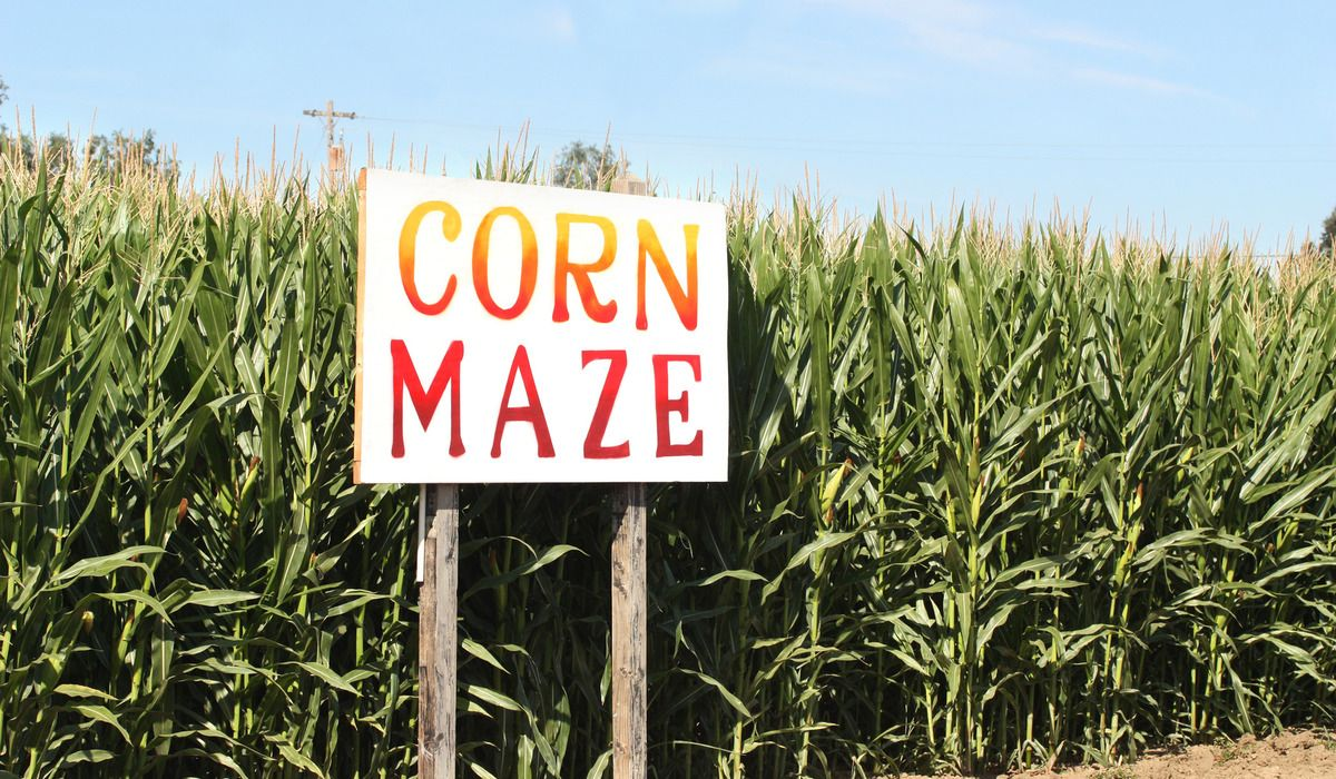 Photodune 12396084 corn maze m