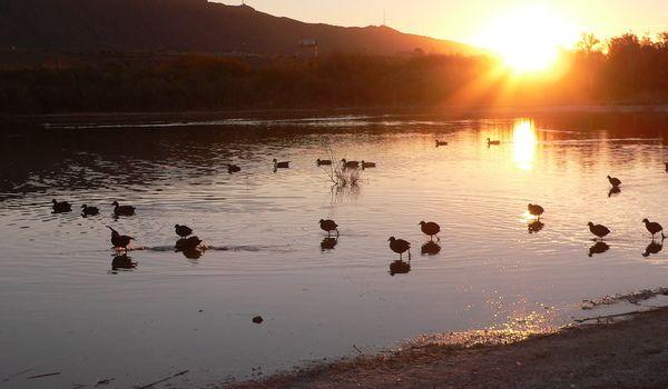 West Texas Birding